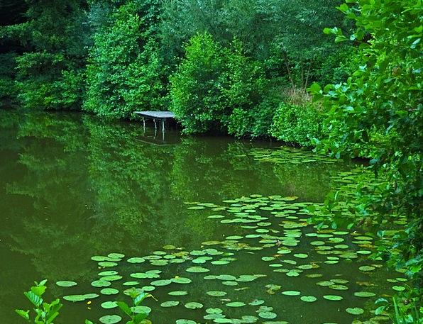 Pond Pool Landscapes Understand Nature Water Lilie