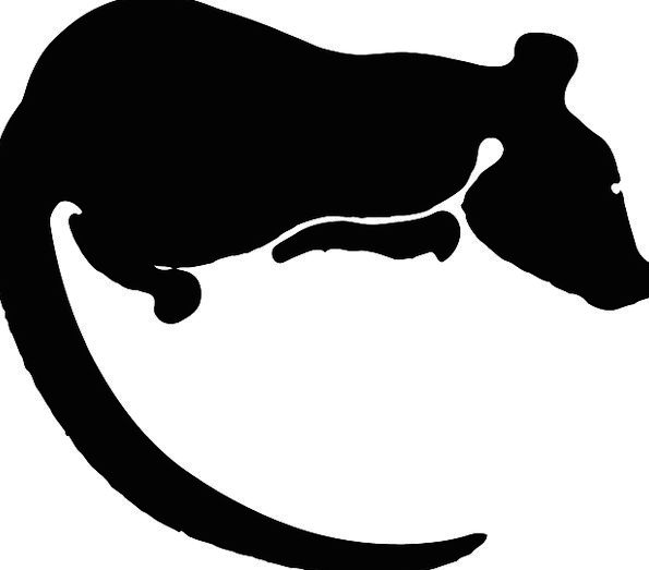 Rat Swine Animal Physical Rodent Silhouette Outlin