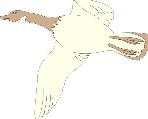 Goose Hovering Bird Fowl Flying Migration White Sn