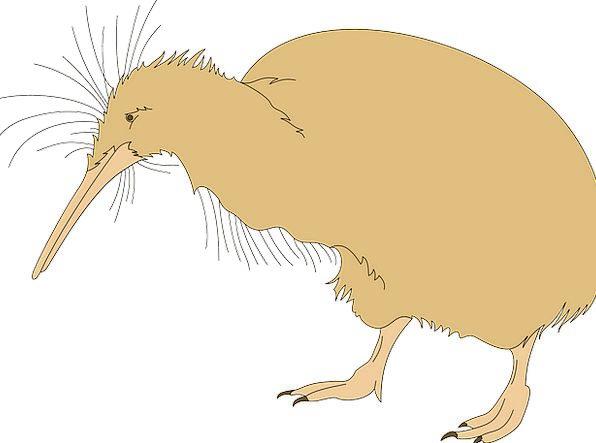 Bird Fowl Beak Bill Kiwi Claws Talons Fuzzy Fuzz U