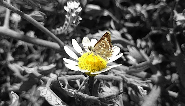Butterfly Landscapes Nature Nature Countryside Dai