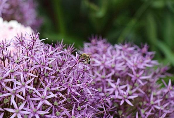 Purple Flowers Landscapes Floret Nature Purple Ela