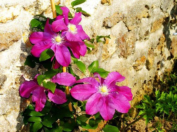 Flowers Plants Landscapes Nature Purple Elaborate