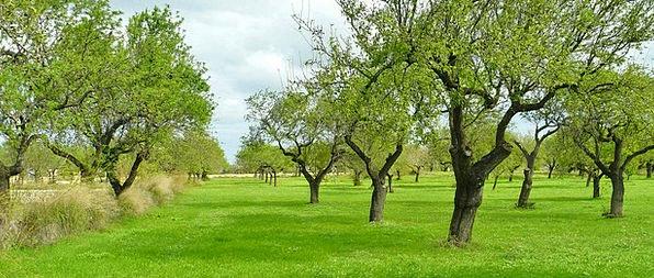 Olive Trees Landscapes Plants Nature Nature Countr