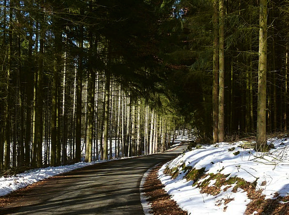 Winter Season Landscapes Woodland Nature Forest Pa