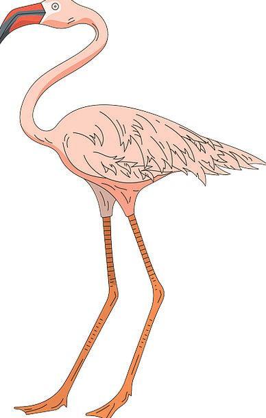 Pink Flushed Fowl Wings Annexes Bird Flamingo Free