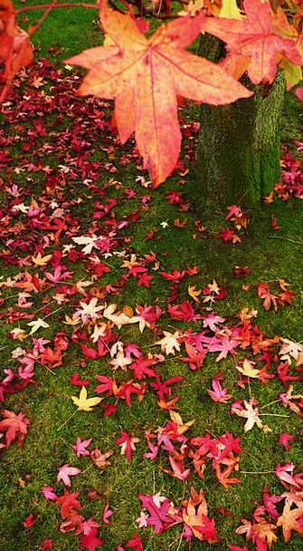 Red Bloodshot Carroty Leaves Greeneries Orange Tre