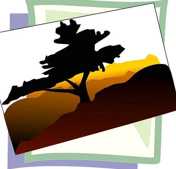 Tree Sapling Landscapes Outline Nature Desert Rewa