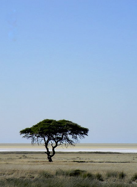 Tree Sapling Landscapes Nature Namibia Africa Sand