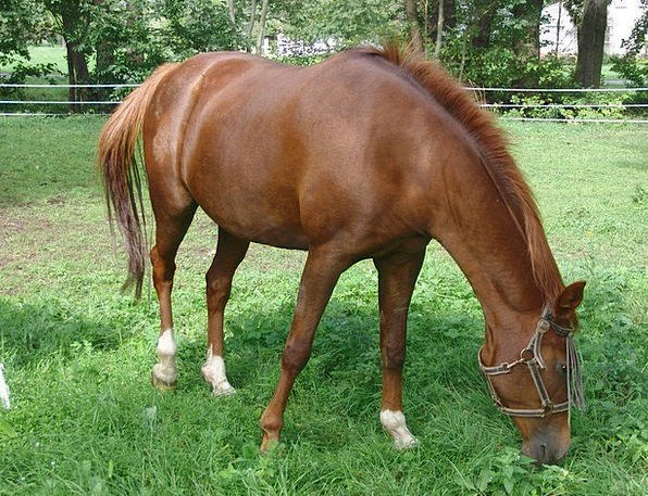 Horse Mount Landscapes Countryside Nature Animal P