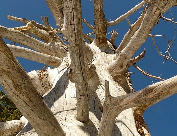 Tree Sapling Traffic Record Transportation Wood Ti