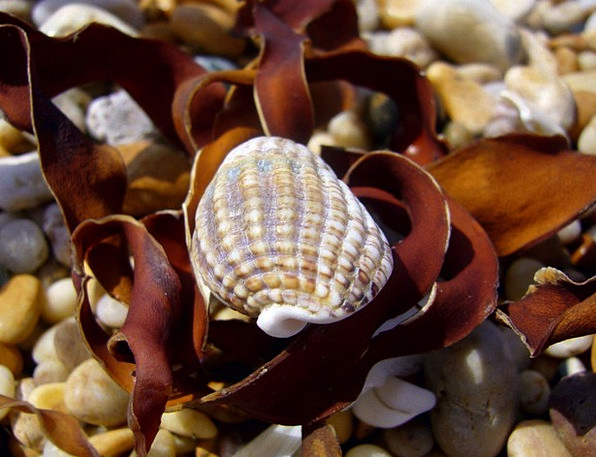 Seashell Vacation Seashore Travel Devon Beach Beau