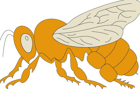 View Opinion Carroty Bee Orange Wings Annexes Side