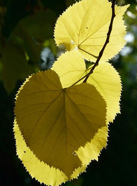 Lipovina Greeneries Hispanic Leaves Coloring Back
