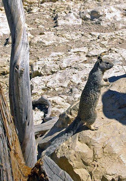Gopher Physical Burrowing Searching Animal Wild Ro