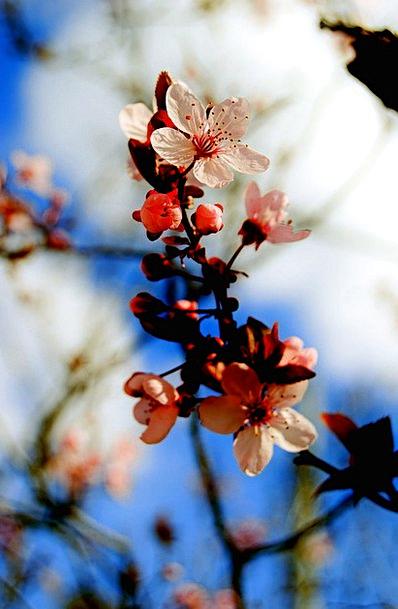 Blossom Flower Landscapes Sapling Nature Nature Co
