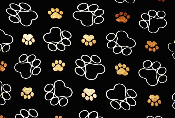 Dog Tracks Paths Pawprint Trace Background Context