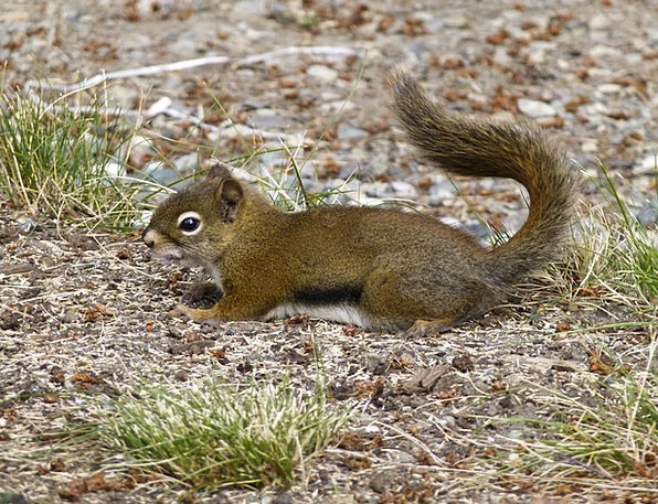 Ground Squirrel Physical Outdoor Outside Animal Na