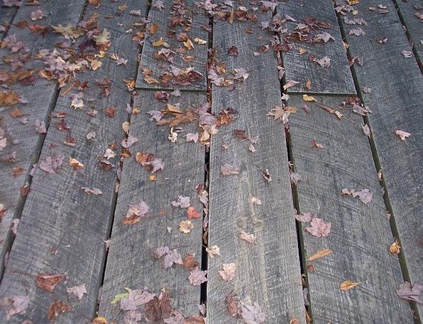 Boardwalk Walkway Worn Leaves Greeneries Weathered