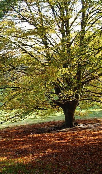 Tree Sapling Fall Reduction Autumn Foliage Greener