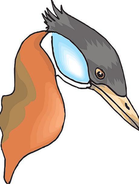 Head Skull Fowl Duck Stoop Bird Long Extended Free