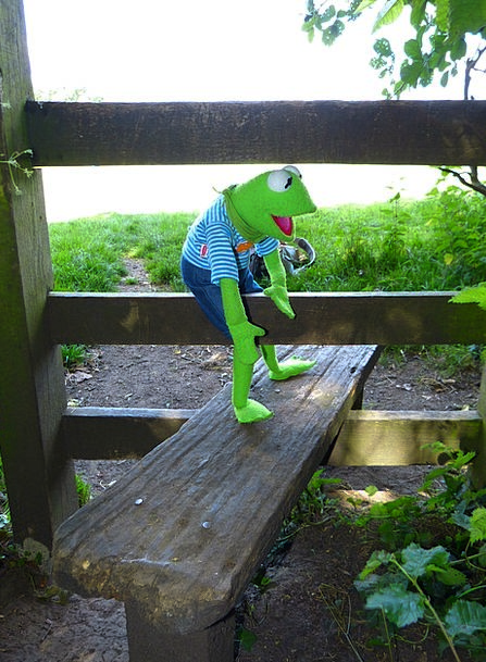 Kermit Get Over Recover Frog Gate Entrance Input W