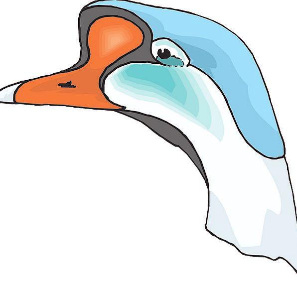 Head Skull Azure White Snowy Blue Bird Fowl Goose