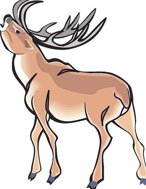 Angry Annoyed Wild Rough Deer Animal Physical Antl