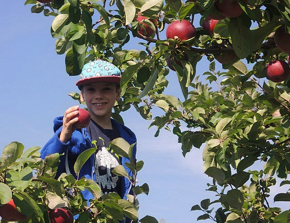 Fall Reduction Boy Lad Apple Leaves Greeneries Nat