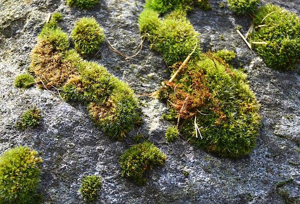 Moss Landscapes Plot Nature Nature Countryside Gar