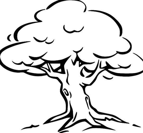 Tree Sapling Recurrent Trunk Stem Perennial Roots