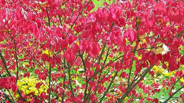Burning Red-hot Scrubland Red Bloodshot Bush Leave