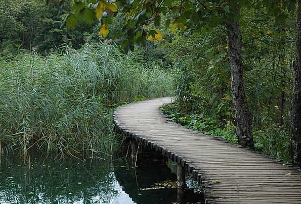 Bridge Bond Landscapes Lime Nature Nature Countrys
