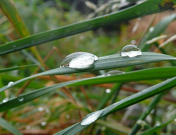 Dew Precipitation Landscapes Foliage Nature Moistu
