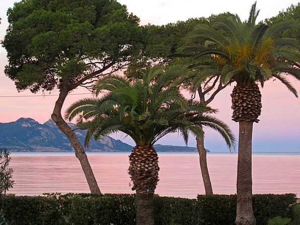 Mallorca Reserved Palm Trees Booked Abendstimmung