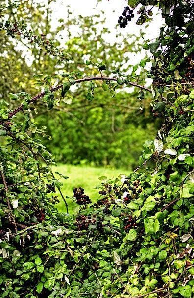 Window Gap Landscapes Hedgerow Nature Hedges Hedge