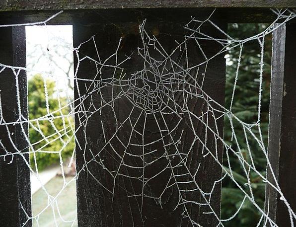 Cobweb Mesh Spider Web Arachnid Spiderweb Creepy I