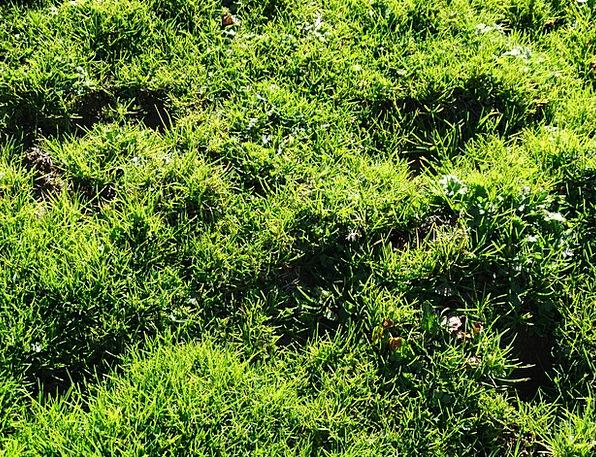 Grass Lawn Field Alpine Meadow Meadow Juicy Green