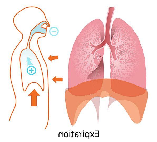 Body Form Humanoid Expiration End Human Free Vecto