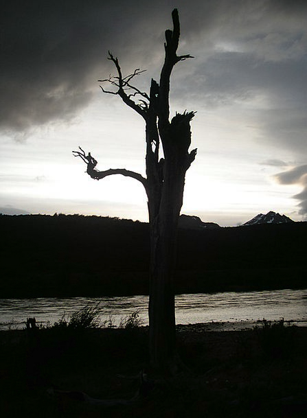 Chile Vacation Sundown Travel Dead Tree Sunset Bac