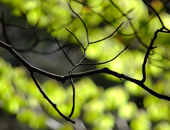 Branches Twigs Landscapes Countryside Nature Sprin