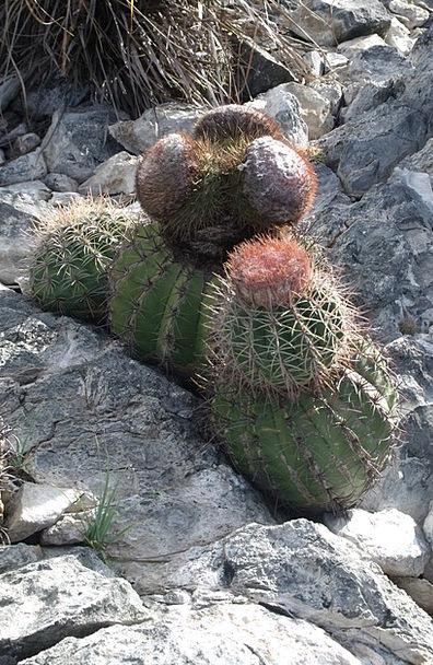 Venezuela Landscapes Nature Rocks Pillars Cactus D