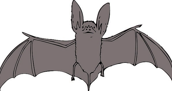 Bat Racket Faunae Night Nightly Animals Scary Vamp
