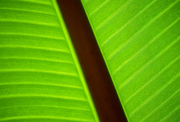 Green Lime Landscapes Nature Plant Vegetable Leaf