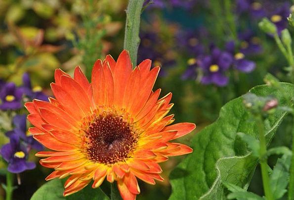 Flower Floret Landscapes Countryside Nature Flora
