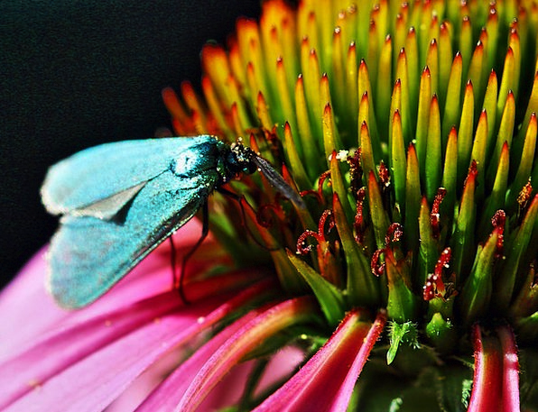 Insect Bug Countryside Color Hue Nature Flower Flo