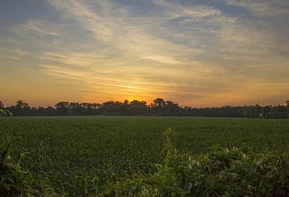 Sunset Sundown Vacation Travel Field Arena Corn Fi
