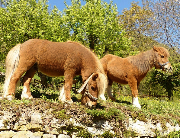 Pony Drink Bother Food Graze Scratch Eat Nice Hors