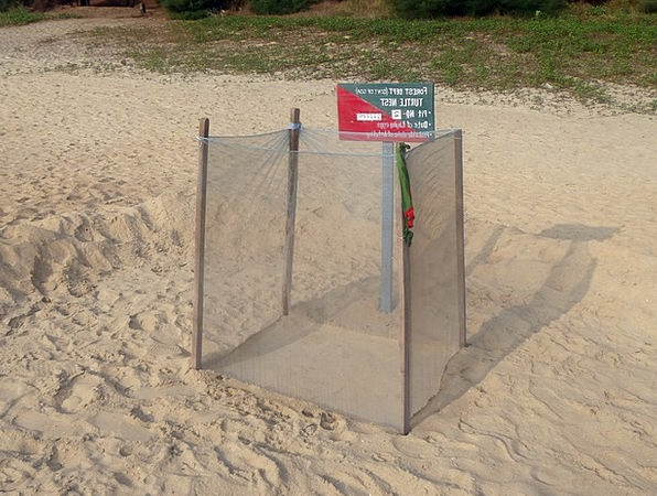 Turtle Nest Pattern Guarded Protected Marking Sea