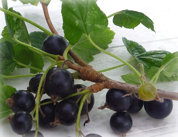 Blackcurrant Currant Berry